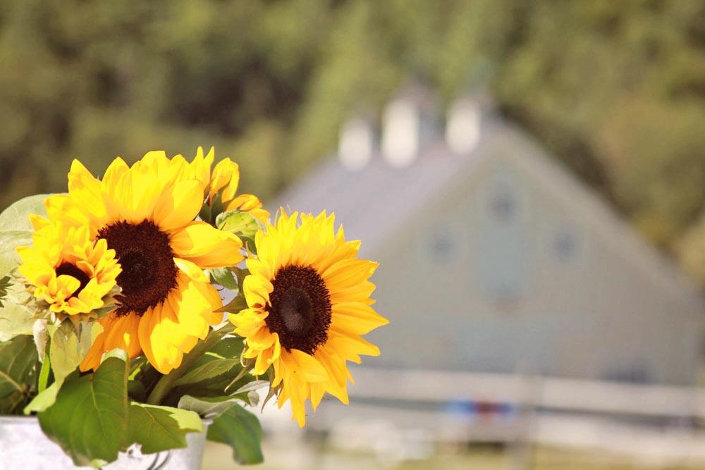 Riverside Farm Vermont - Wedding Details - Flowers from Pittsfield Garden Center