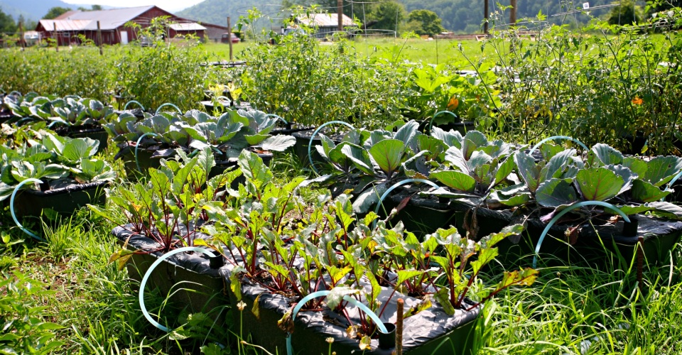 Farming in Vermont