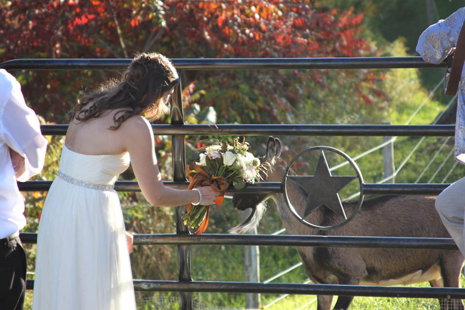 Real Vermont Wedding Details -The bride meets Sweet Georgia P's Goats